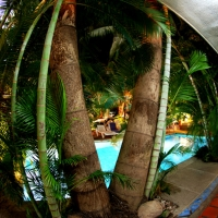 ECO-LODGE-_VISTA_DESDE_PALMERAS - Copy